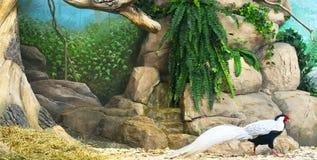 Zoo park Stock Photos