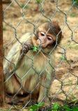 Zoo-Park Poppi Italy: wenig Barbary-Affenaffe Stockfotos