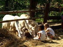 Zoo Park Poppi Italy : white donkeys and childs Royalty Free Stock Images