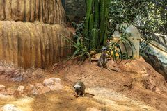 Two lovely meerkats sitting on the ground on the background of green plants royalty free stock photos