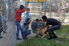 The zoo in Rafah gives visitors a chance to play with animals in the Gaza Strip royalty free stock image