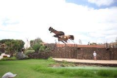 Zoo Rancho Texas, Lanzarote, Kanarische Inseln adler Stockbild