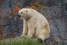 Zoo redaguje 16 07 2013 Obrazy Royalty Free