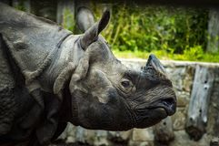 Zoo, Rhino, Animal, Park Royalty Free Stock Images