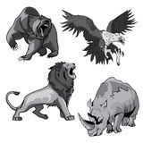 Zoo rhino, hawk, grizzly bear and savannah lion. Angry and ferocious rhino in zoo and dangerous or belligerent hawk or falcon, eagle hunting for prey, roaring Royalty Free Stock Photos