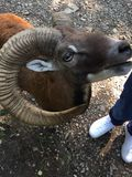 Zoo Sababurg fotografia stock libera da diritti