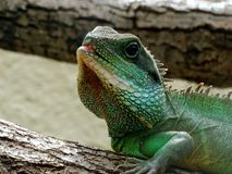 Zoo Servion and Tropiquarium of Servion - 2017. Reptile looking at me Royalty Free Stock Image