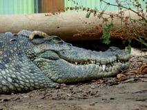Zoo Servion and Tropiquarium of Servion - 2017. Sleeping Crocodile stock photos