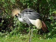 Zoo Servion und Tropiquarium von Servion - 2017 Lizenzfreies Stockfoto