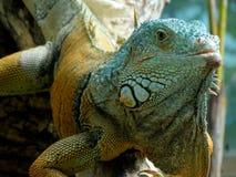 Zoo Servion und Tropiquarium von Servion - 2017 Stockbild