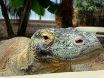 Zoo Servion und Tropiquarium von Servion - 2017 Lizenzfreies Stockbild