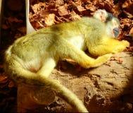 Zoo Servion und Tropiquarium von Servion - 2017 Stockbilder