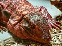 Zoo Servion und Tropiquarium von Servion - 2017 Stockfotos