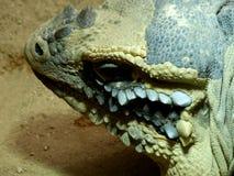 Zoo Servion und Tropiquarium von Servion - 2017 Stockfoto