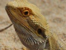 Zoo Servion und Tropiquarium von Servion - 2017 Stockfotografie