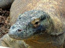 Zoo Servion und Tropiquarium von Servion - 2017 Lizenzfreie Stockfotos