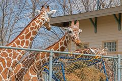 The Zoo in Sioux Falls, South Dakota is a family friendly Attraction for all Ages.  stock photos