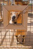 The Zoo in Sioux Falls, South Dakota is a family friendly Attraction for all Ages.  stock photography