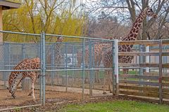 The Zoo in Sioux Falls, South Dakota is a family friendly Attraction for all Ages.  royalty free stock images