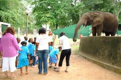 Zoo von Abidjan Lizenzfreie Stockbilder