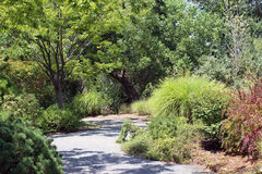 Zoo Walkway. A path winds through the forest at the Albuquerque Zoo Royalty Free Stock Images