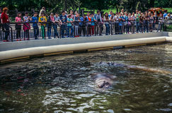 ZOO in Warsaw. Warsaw, Poland - May 12, 2015. Kids looks at common hippopotamus in Warsaw Zoological Garden Royalty Free Stock Image