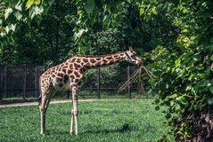 ZOO in Warsaw Royalty Free Stock Image