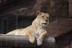 In a zoo. Wild animal animals and birds freely feel in a zoo stock photo