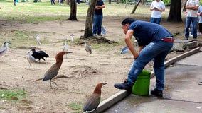 Zoo worker feeding tiger heron. Zoo worker feeding birds in venezuela south america Rufescent Tiger-Heron Tigrisoma lineatum Stock Photography