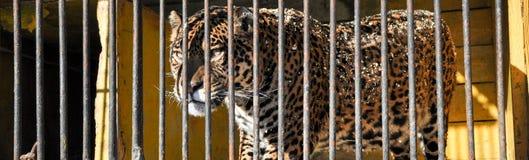 Zoo zwierząt komórki klatki lwa więzienia tygrysi birdcage Zdjęcie Royalty Free