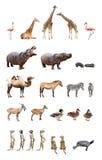 Zoo zwierzęta Fotografia Royalty Free