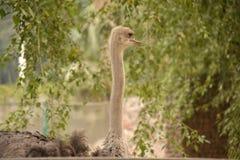 Zoo zwierzęta Zdjęcie Royalty Free