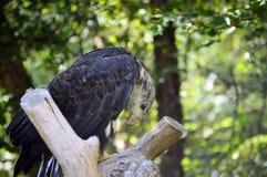 Zoodag Royaltyfria Bilder