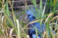 Zoodag Fotografering för Bildbyråer