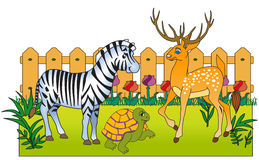 Zoodjur Arkivfoto
