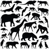 Zoodjur Arkivbild