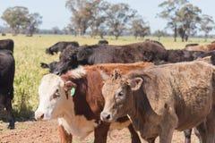 zoogdier Stock Foto's