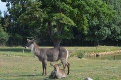 zoogdieren Royalty-vrije Stock Foto's