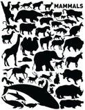 Zoogdieren royalty-vrije illustratie