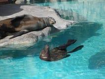 Zoogdieren en pool stock foto's
