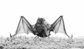 Zoogdieren natuurlijk geschikt voor ware en aanhoudende vlucht De knuppel zendt ultrasoon geluid uit om echo te veroorzaken Knupp stock fotografie
