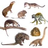Zoogdieren van Zuid-Amerika op wit stock fotografie