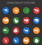 Zoogdieren 16 vlakke pictogrammen stock illustratie