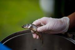 Zookeeper feeding animals fish Stock Photo
