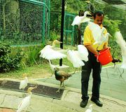 Zookeeper feeding birds Royalty Free Stock Image