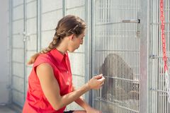 Zookeeper playing with cat in animal shelter. In a cage royalty free stock image