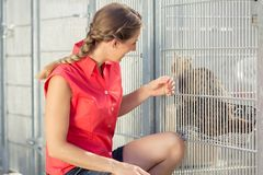 Zookeeper playing with cat in animal shelter. In a cage stock images
