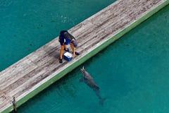 Zookeeper voedende dolfijn Stock Afbeeldingen