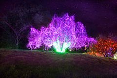 Zoolights at the Point Defiance Zoo in Tacoma, WA. Shington stock photo