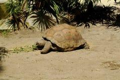 Zoologia, żółw obraz stock